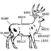 Field Aging Whitetail Deer